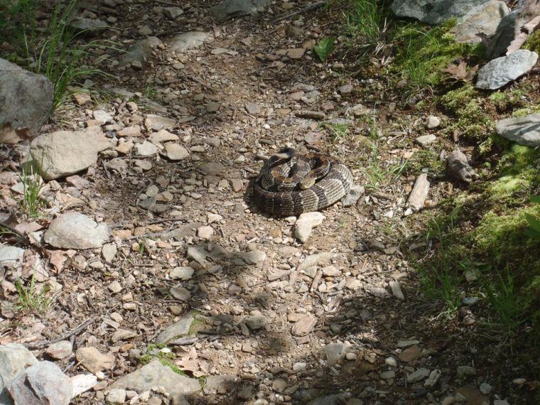AP Trail-snake.JPG
