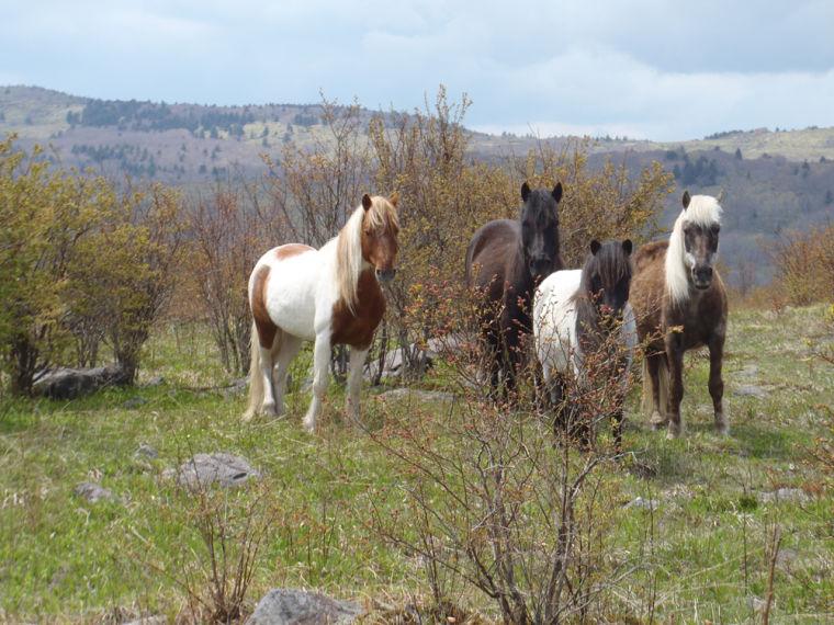AP Trail-horses,jpg.jpg