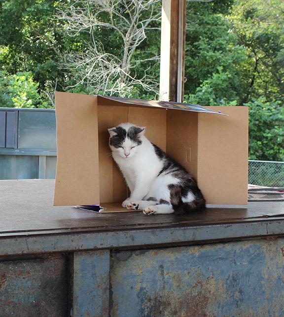 Thomas the Cat.jpg