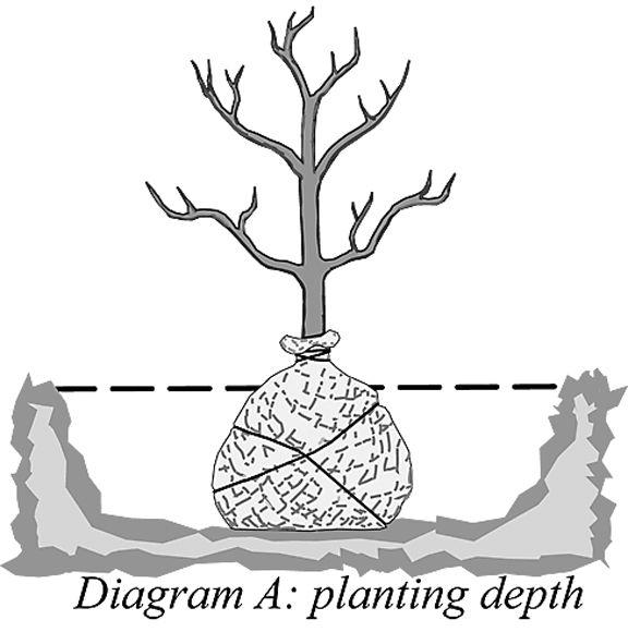plateau gardening2.jpg