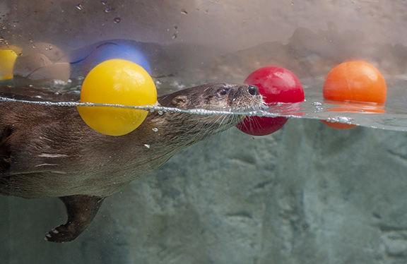 River Otter Falls exhibit.jpg