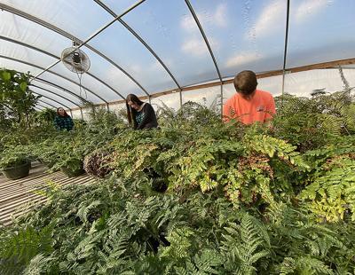 WSCC greenhouses