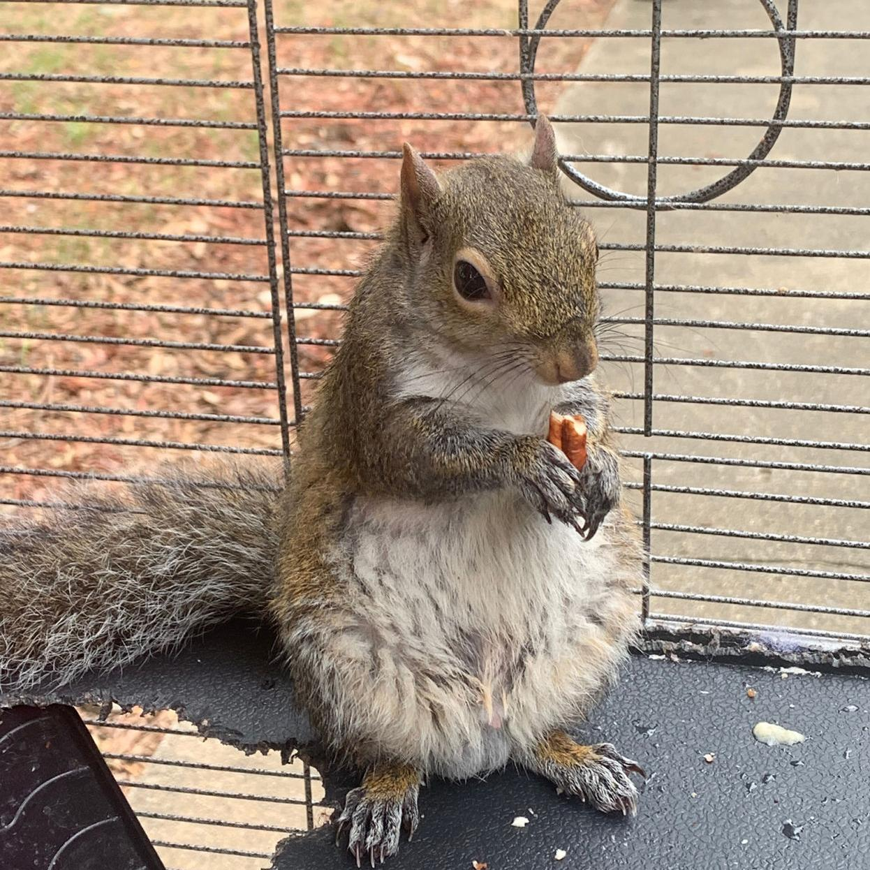 Video) Limestone man fed 'attack squirrel' meth | News