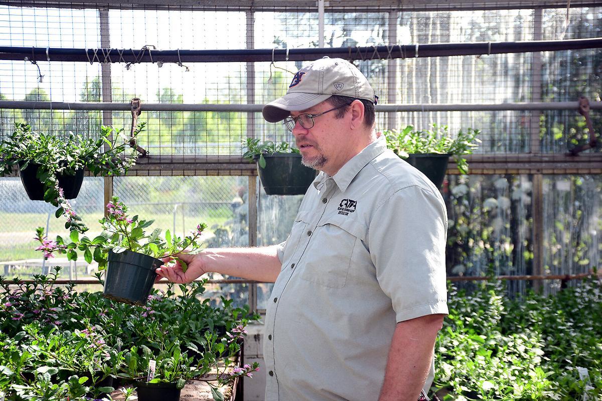 CATA horticulture