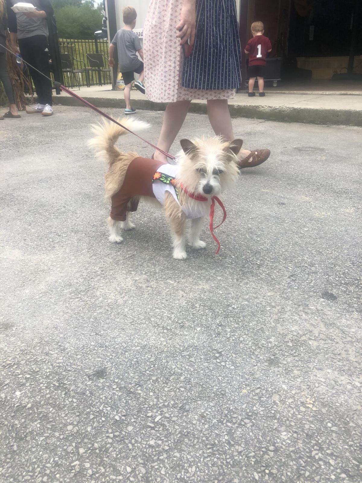 Dog at Goatoberfest