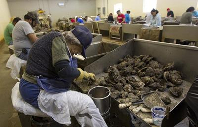 Alabama Seafood