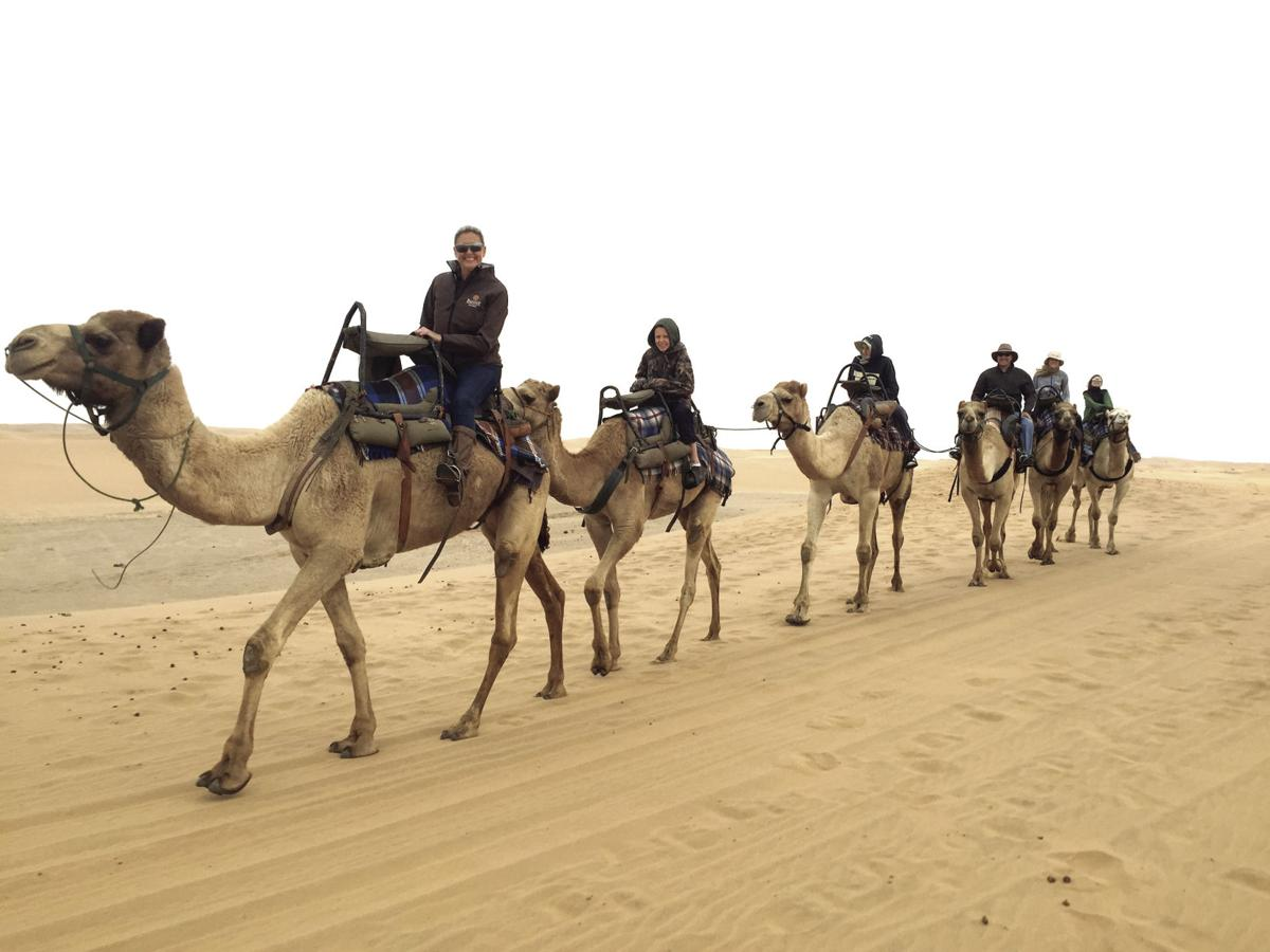 Lowery family camels