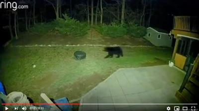 Bear in North Middleton