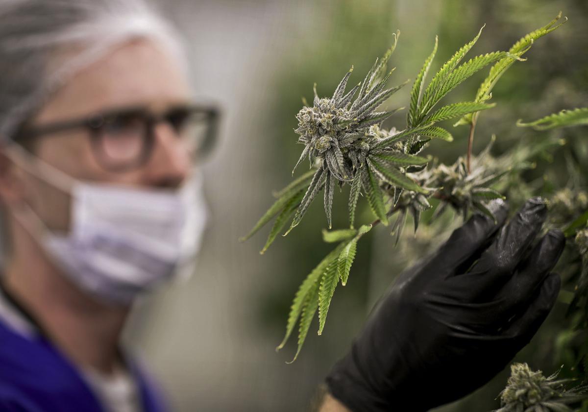 Medical Marijuana PTSD