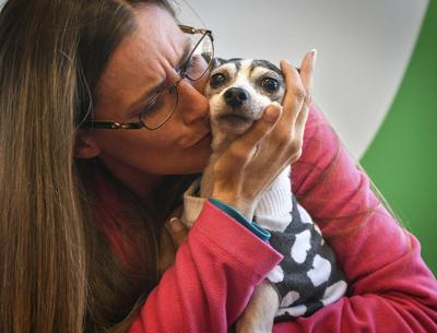 Dog Lost Since 2007 Found