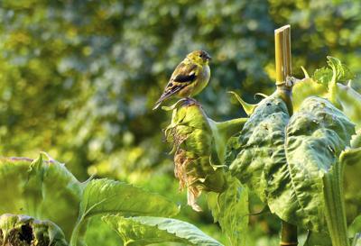 Gardening Feeder Wars