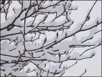 How plants survive winter snow and cold