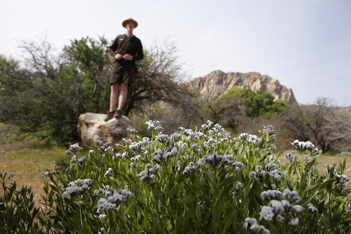 Looking For Wildflowers