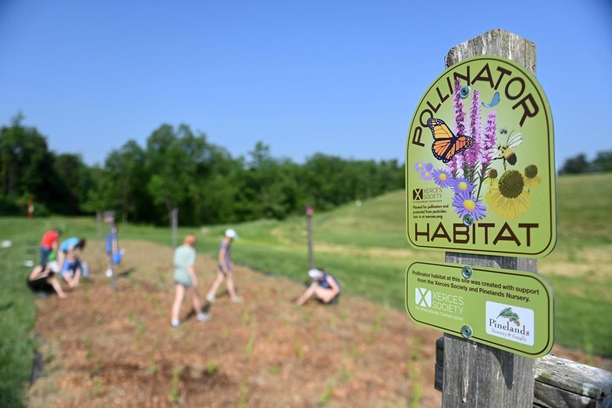 Pollinator Habitat 1