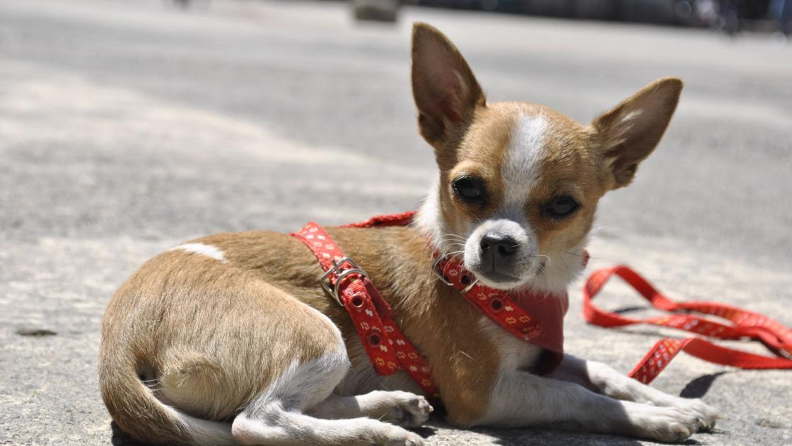 Meet the 19 least intelligent dog breeds