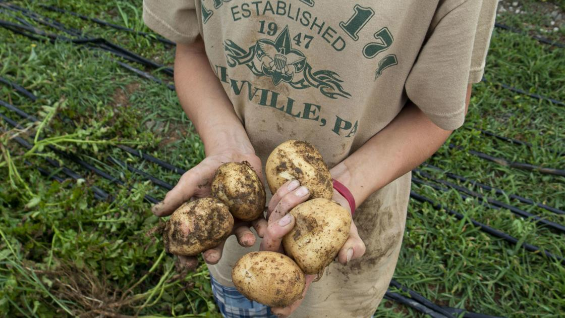 Newville Boy Scout troop helps plant, harvest potatoes for food bank donation