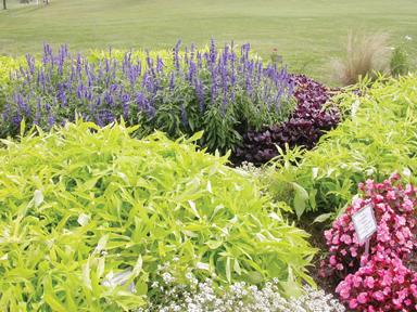 Trial and Idea Garden