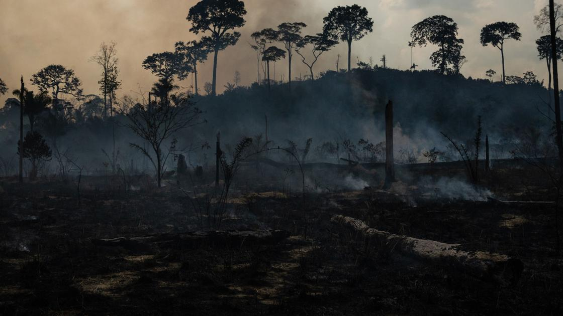 What are the ramifications of the Amazon rainforest fires?