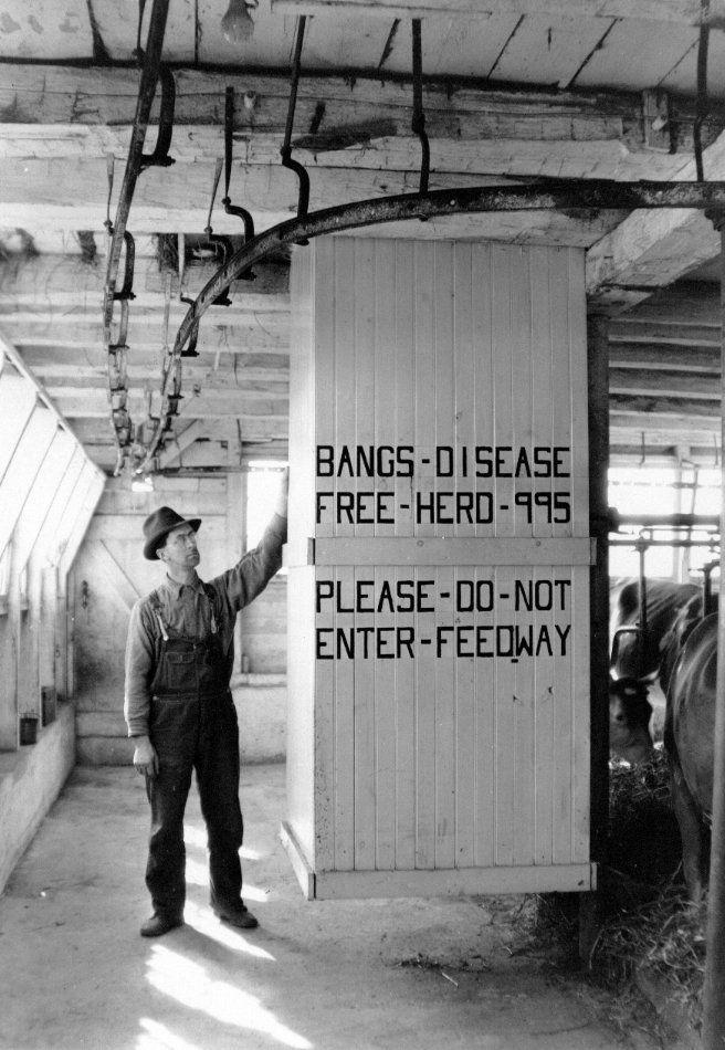 Bang' Disease