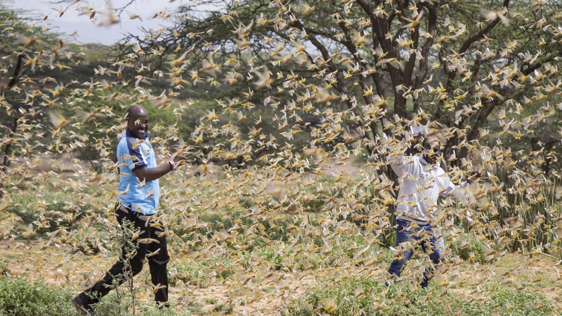 How climate change is feeding Africa's worst locust invasion in decades