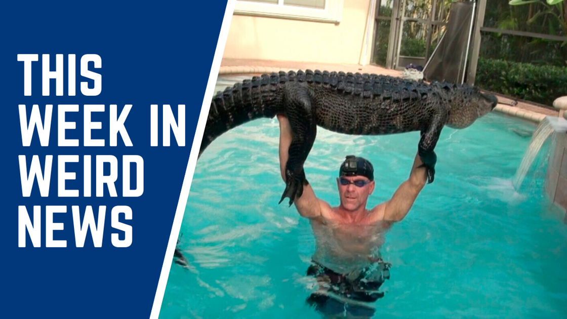 Trapper plays with gator until it tires, pulls it from pool, and more of this week's weirdest news