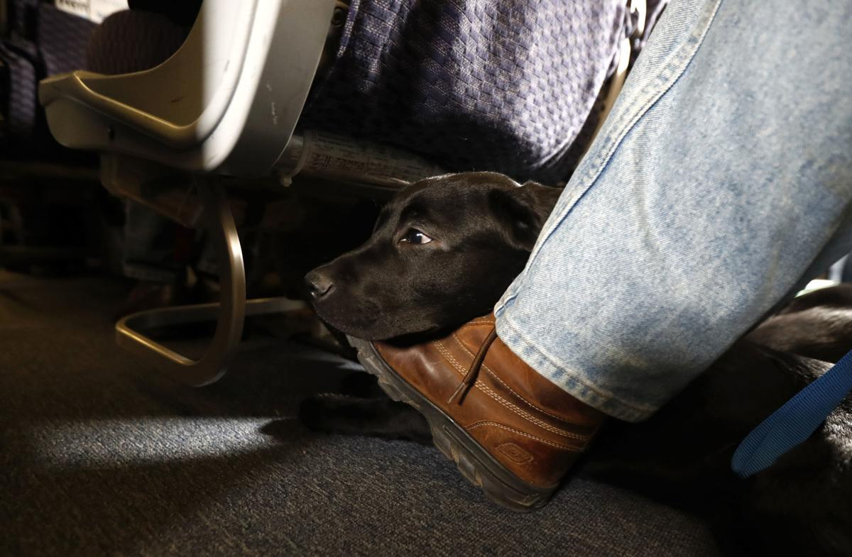 Animals on Planes