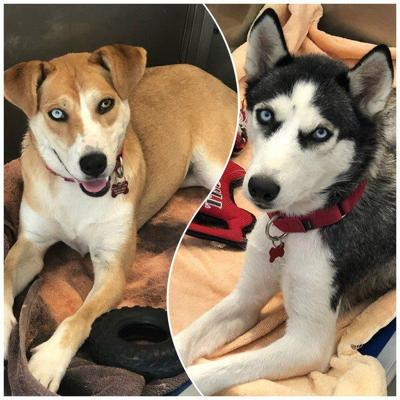Pets of the Week: Buttercup and Eliza