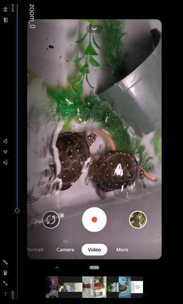 Turtles photo