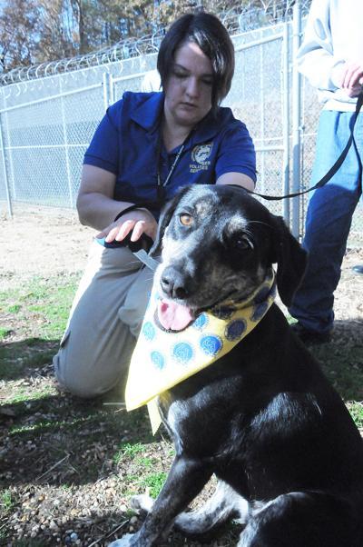 Canine Good Citizen graduation