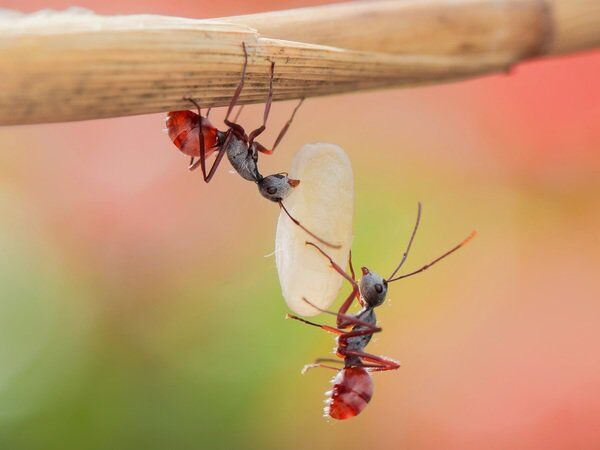 Growings On: Tips for managing summertime insect pests