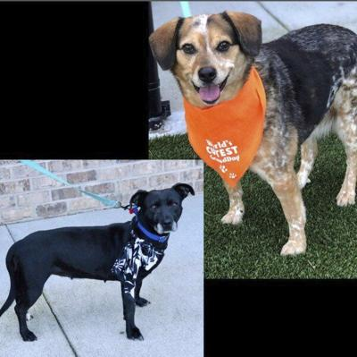 Pets of the Week: Meet Bella and Lucy