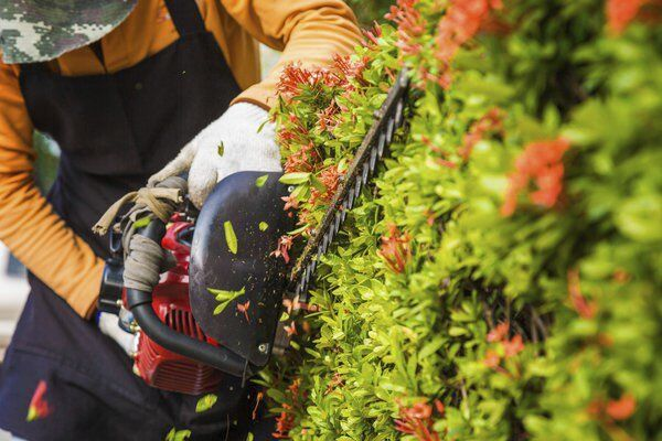 Growings On: Pests can cause plenty of problems for home landscapes