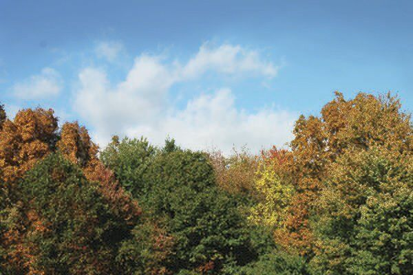 Growings On: Fall is often a better time for tree planting