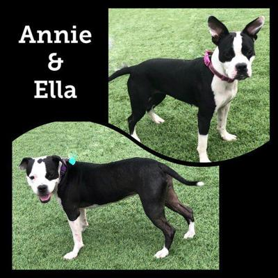 Pets of the Week: Annie and Ella