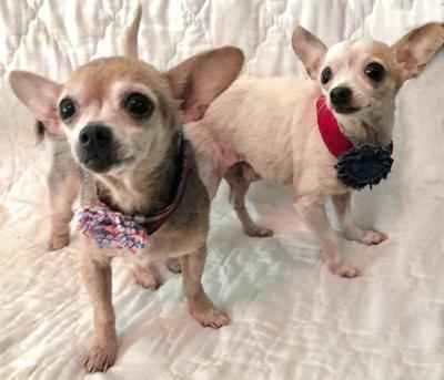 Pets of the Week: Pixie and Sally