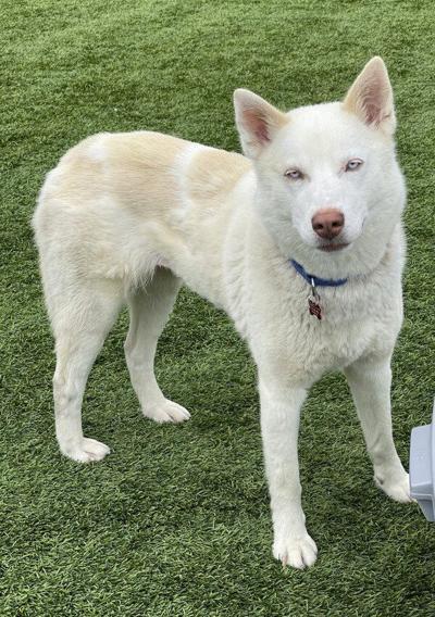 Pet of the Week: Meet Kira