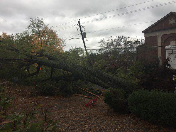 A Halloween scare: Falling tree plunges Dalton neighborhood into darkness