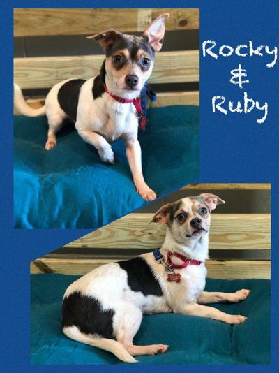 Pets of the Week: Meet Rocky and Ruby