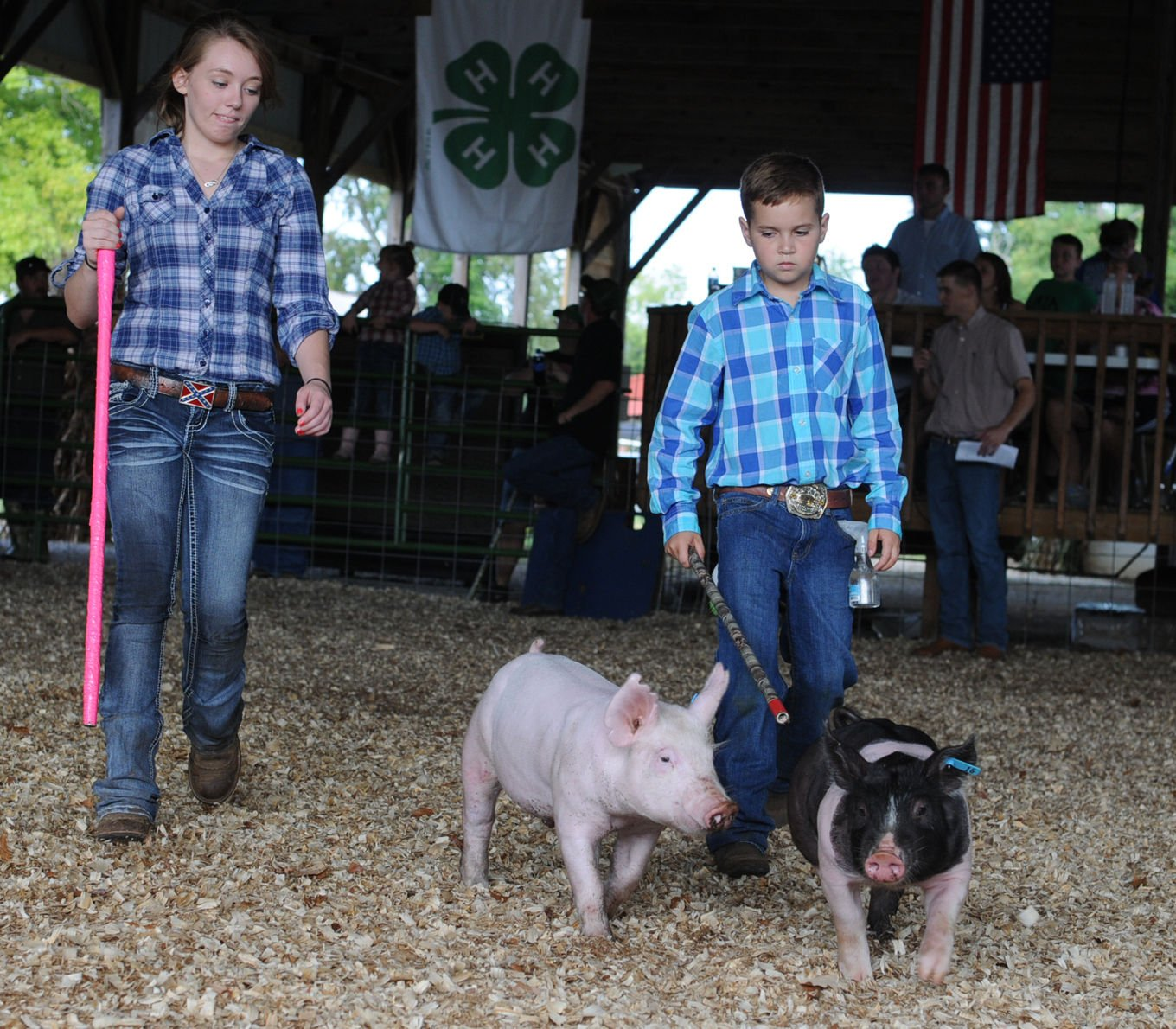 4 H And FFA Hog And Feeder Pig Show