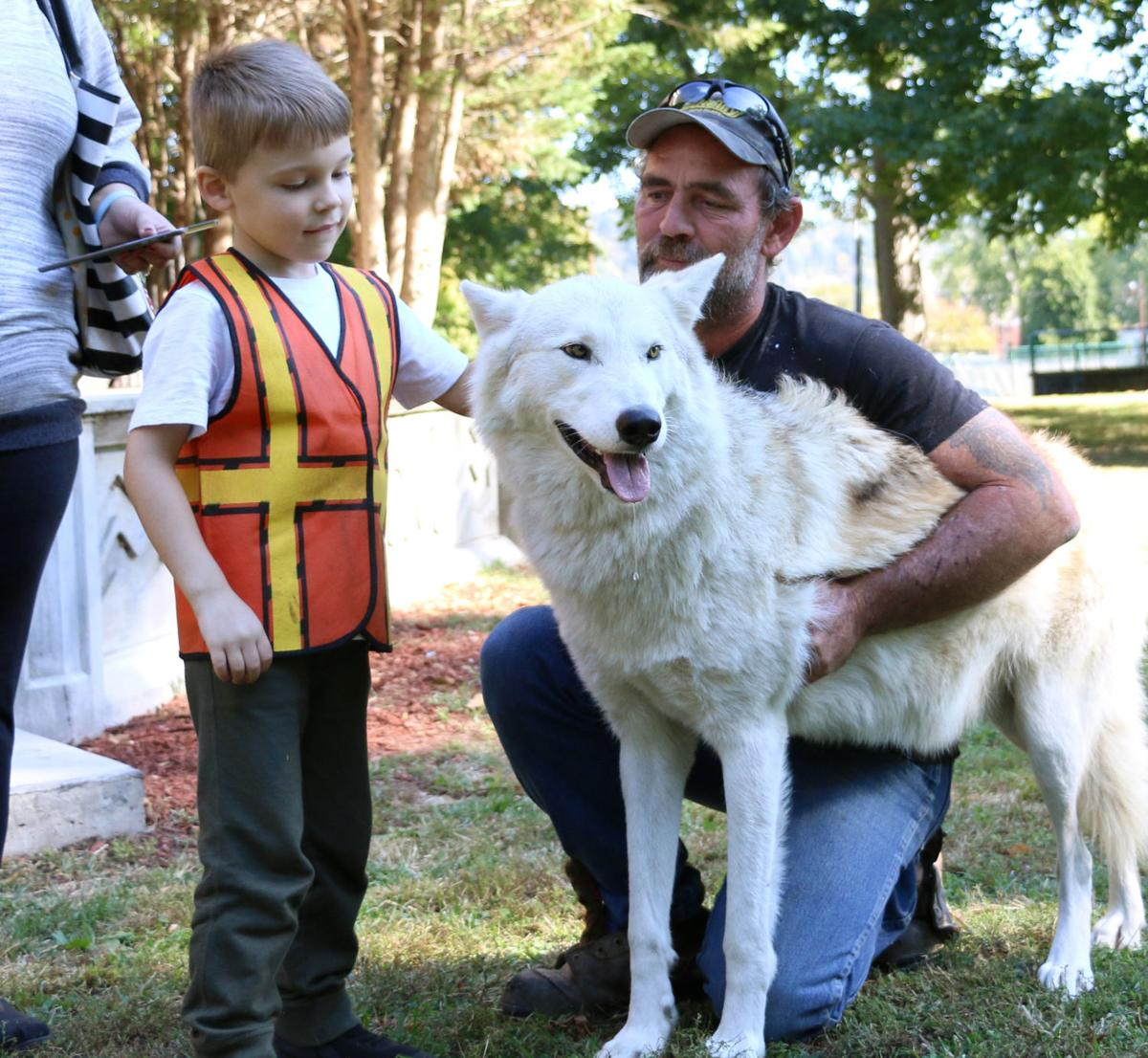 Wolf hybrid puppies for sale in ohio - A Pre School Student Pets Cheyenne The Wolf Dog That John Deboard Brought With Him Rachel Adkins The Daily Independent