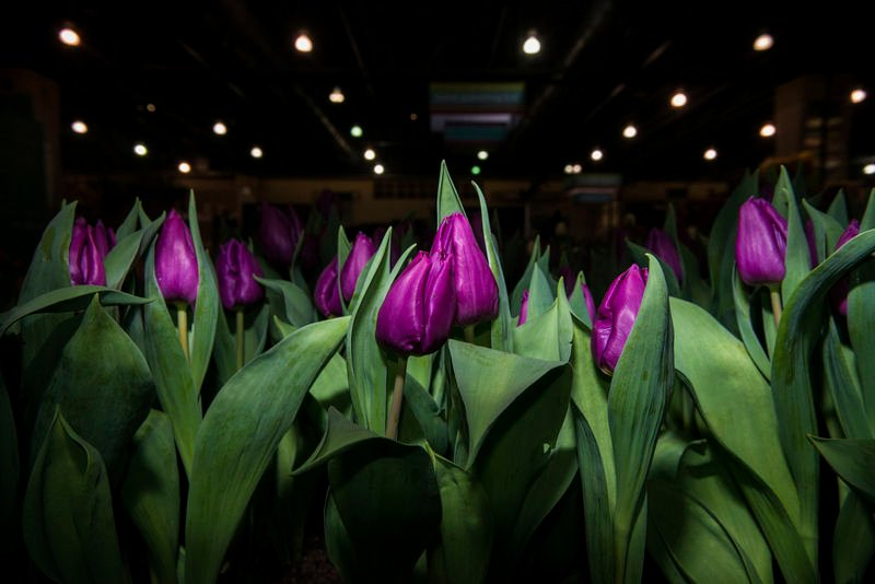 Selinsgrove man helps run biggest flower show in world