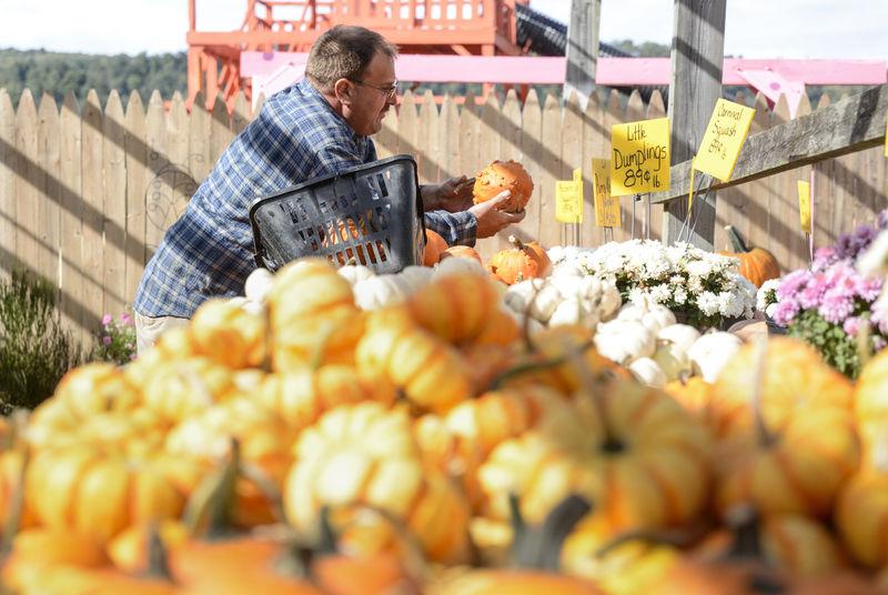 Summer rains, disease affecting Valley pumpkins