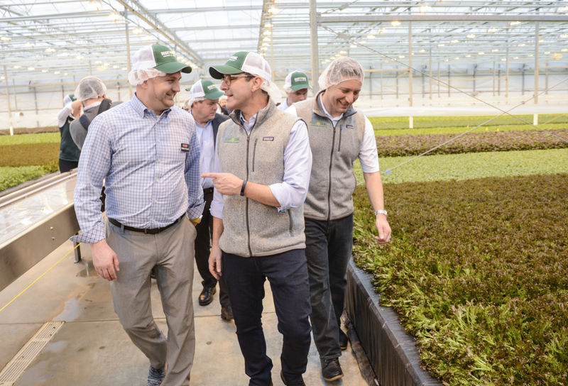 Salad green firm sends first harvest to Food Bank