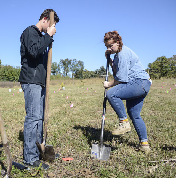 Chestnut Elementary: American Chestnut Trees Planted At Lewisburg High's 2-acre