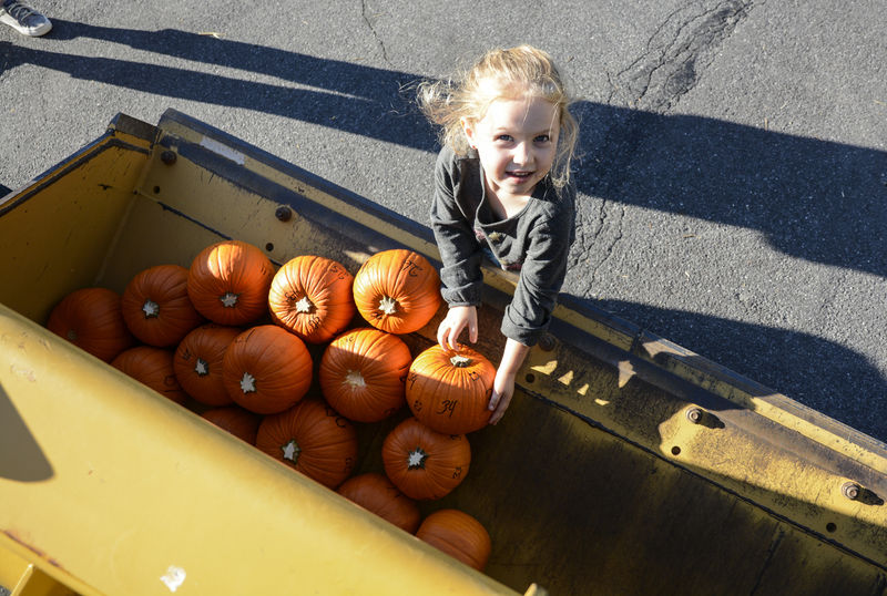 Dozens line street as pumpkins tumble downhill