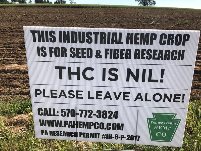 First hemp seeds planted