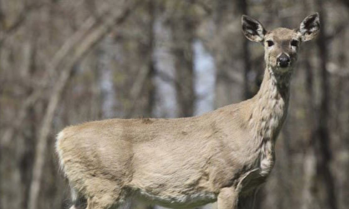 Confirmed case of chronic wasting in Juniata County causes