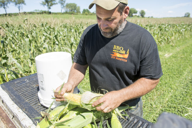 Despite weather extremes, farmers expect good fall harvest