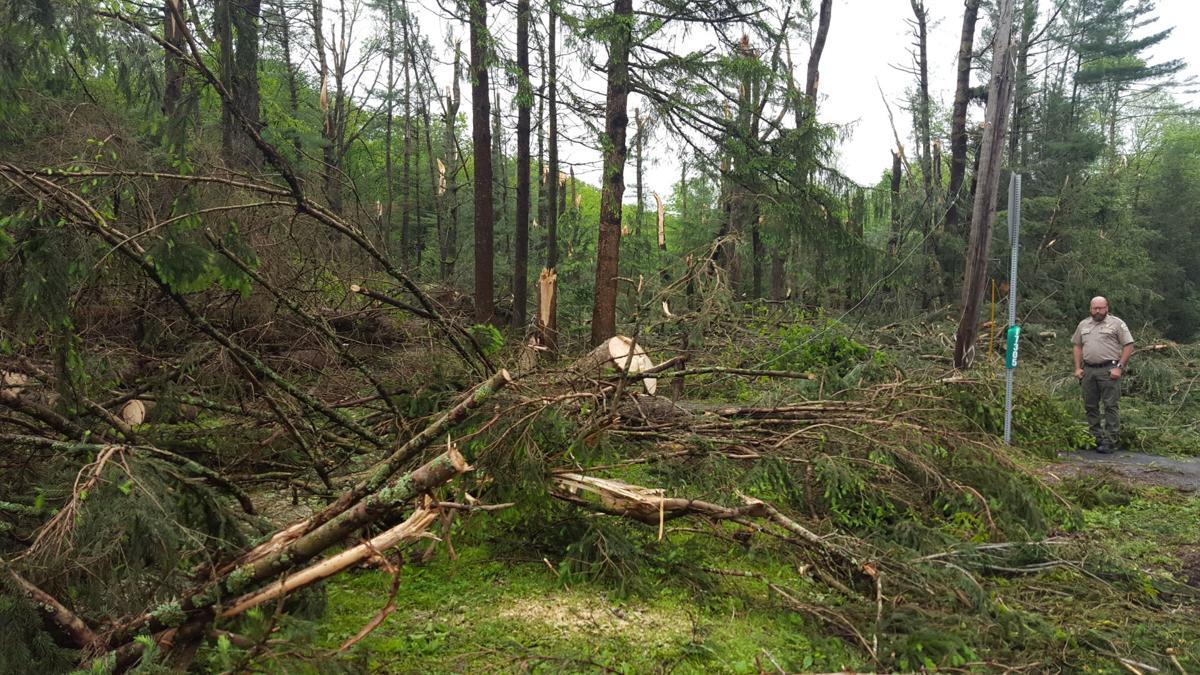 Downburst, not tornado, damaged trees at R.B. Winter