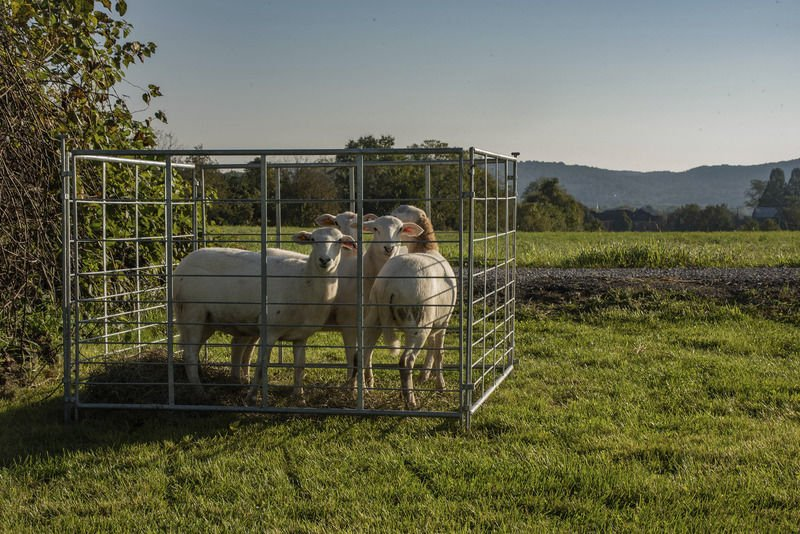 SU incorporates solar panels and sheep to campus initiatives